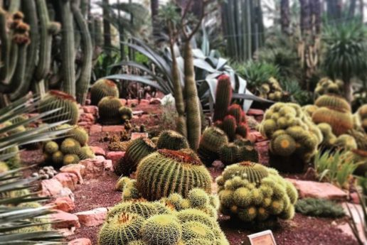 cactus-2398591_1280